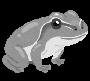 灰色のアマガエル