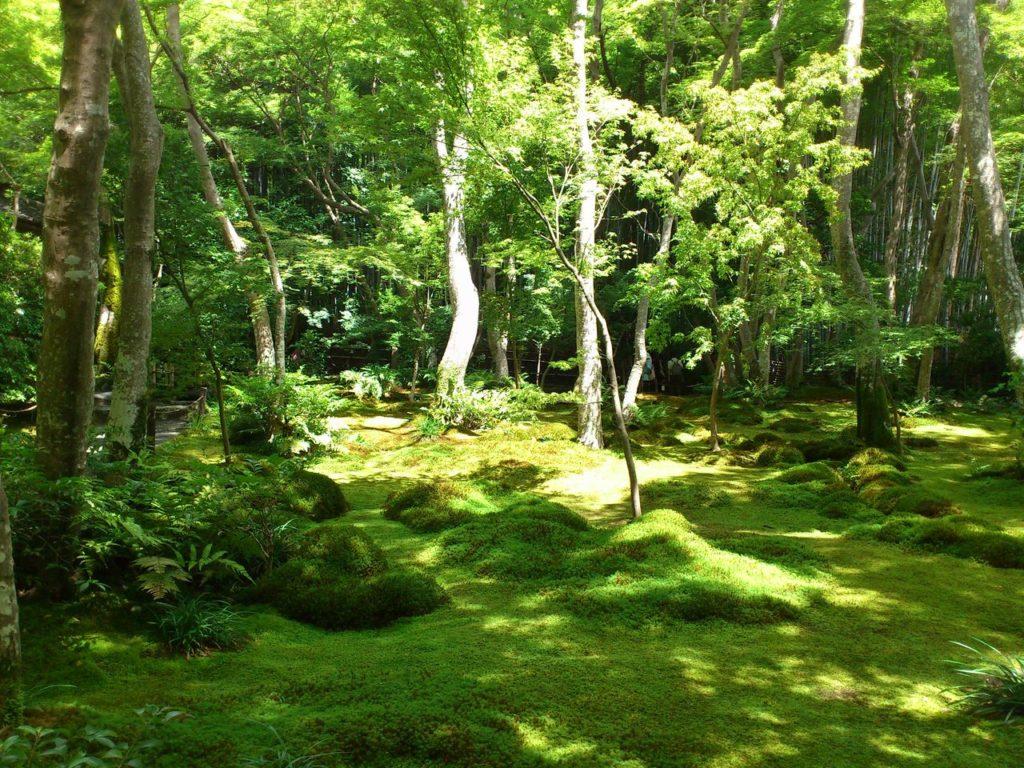 祇王寺の苔の庭