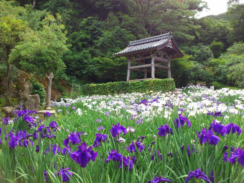 常高寺の花しょうぶ園