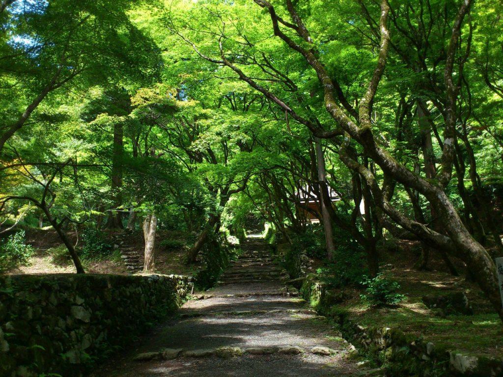 鶏足寺(旧飯福寺)の参道 その2