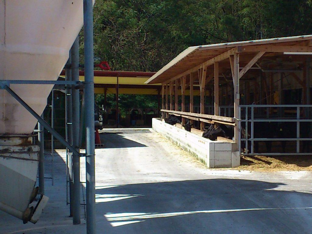 古株牧場の牛舎
