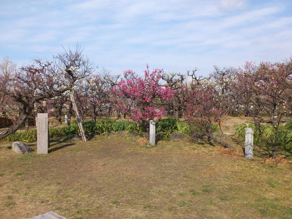 安八百梅園の梅の木
