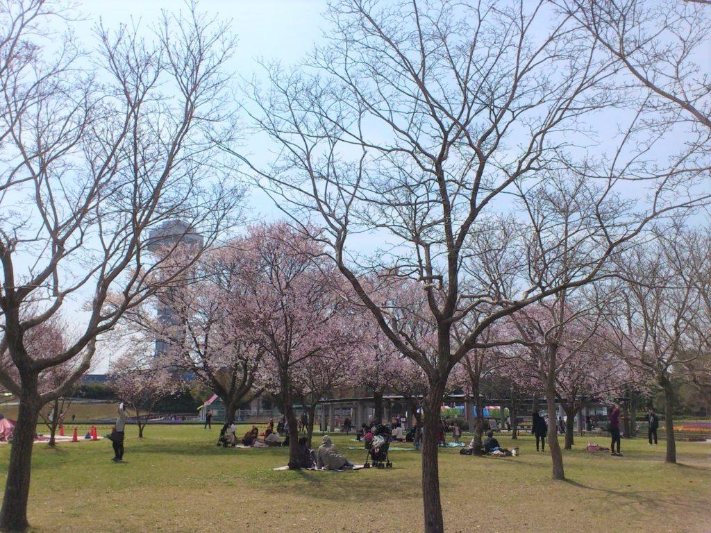 木曽三川公園センターの桜