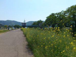 余呉湖観光駐車場への道