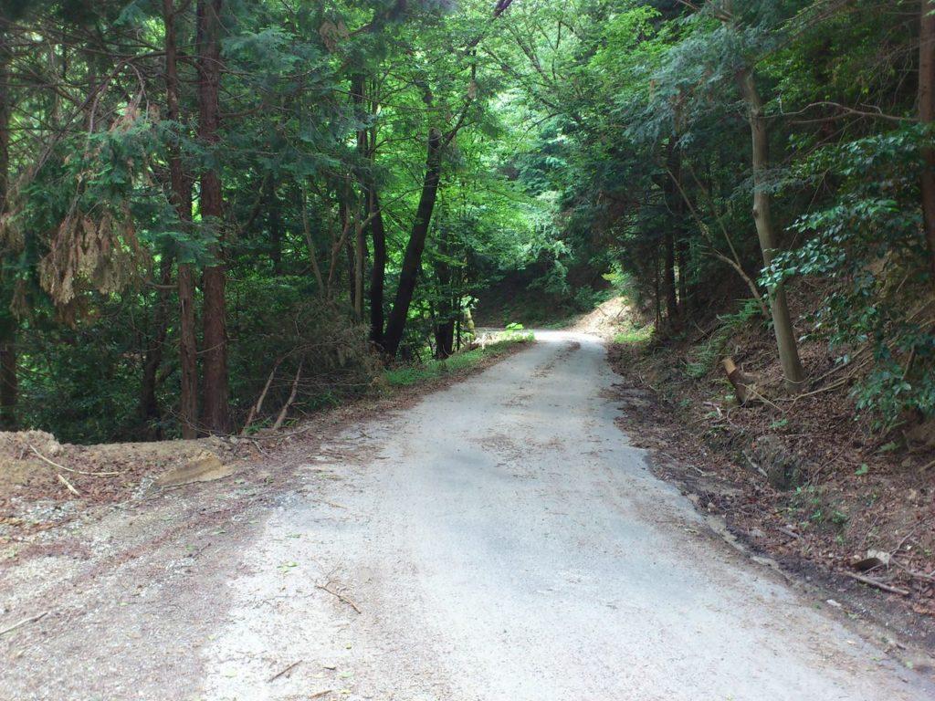 阿星山の林道