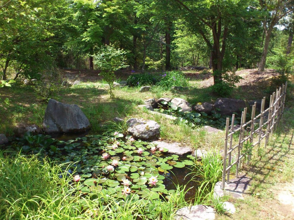 常楽寺の蓮池のある庭