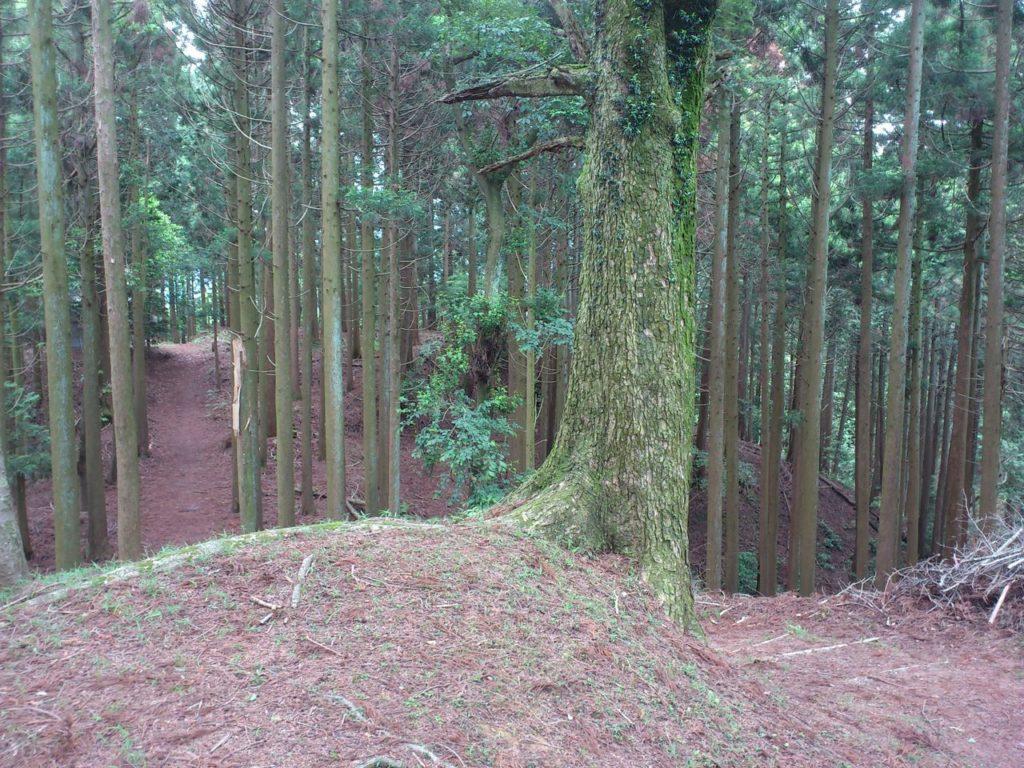 平井方面登山道