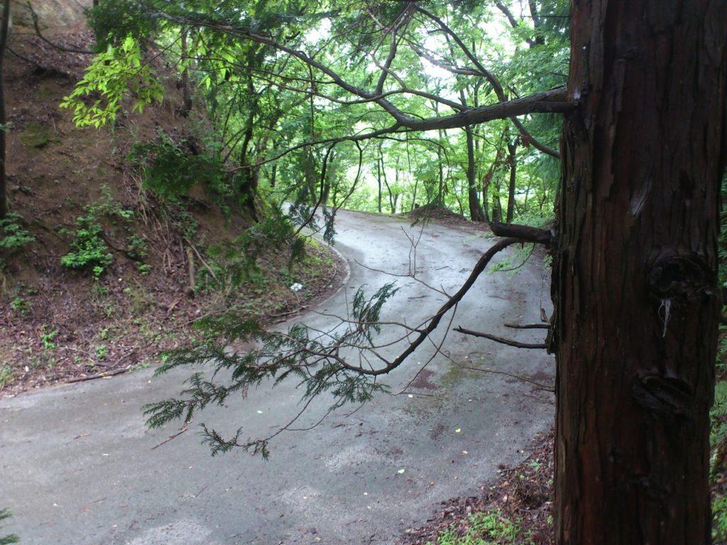 大依山の林道