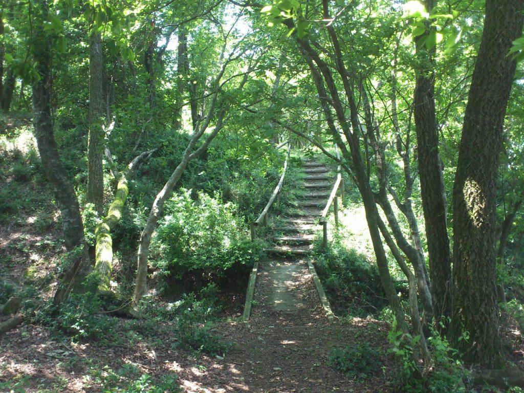 山頂手前の橋と階段
