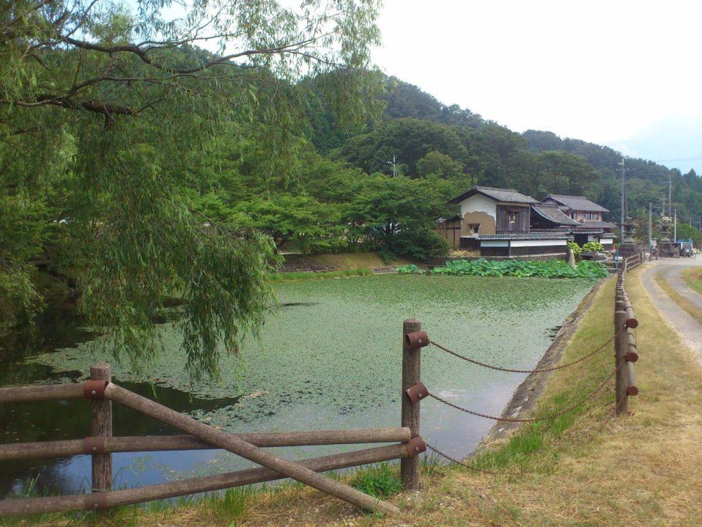 観音寺の蓮池