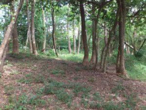 秀吉陣地跡の東尾根