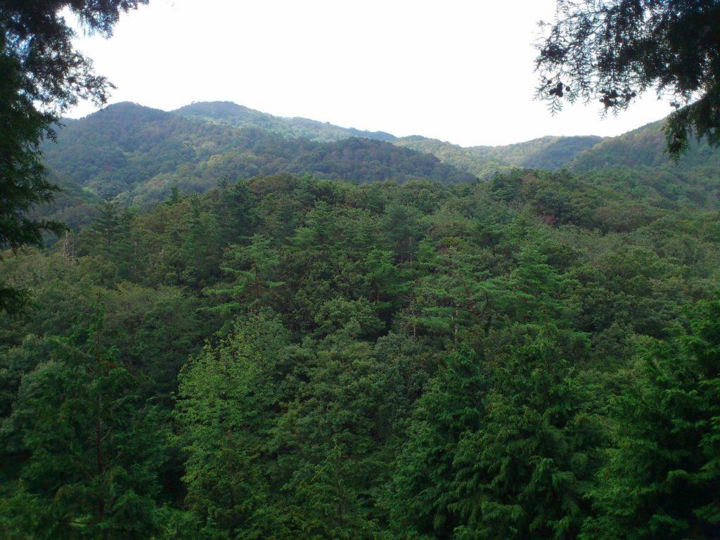 紅葉する直前の山