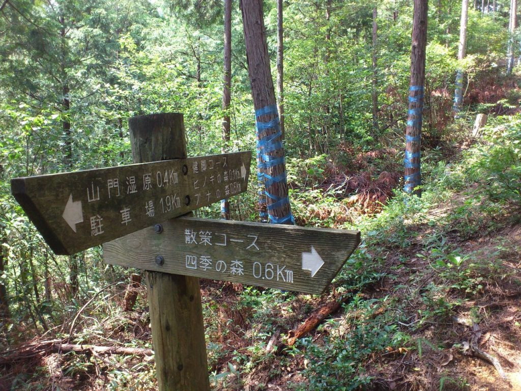 南分岐(奥)ブナの森コース(右)四季の森コース