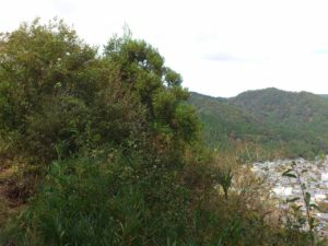 本丸からの眺め(左)