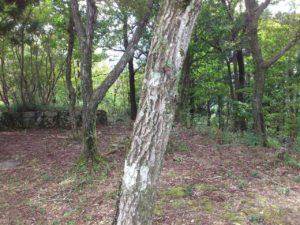 燧ヶ城址の本丸(左)