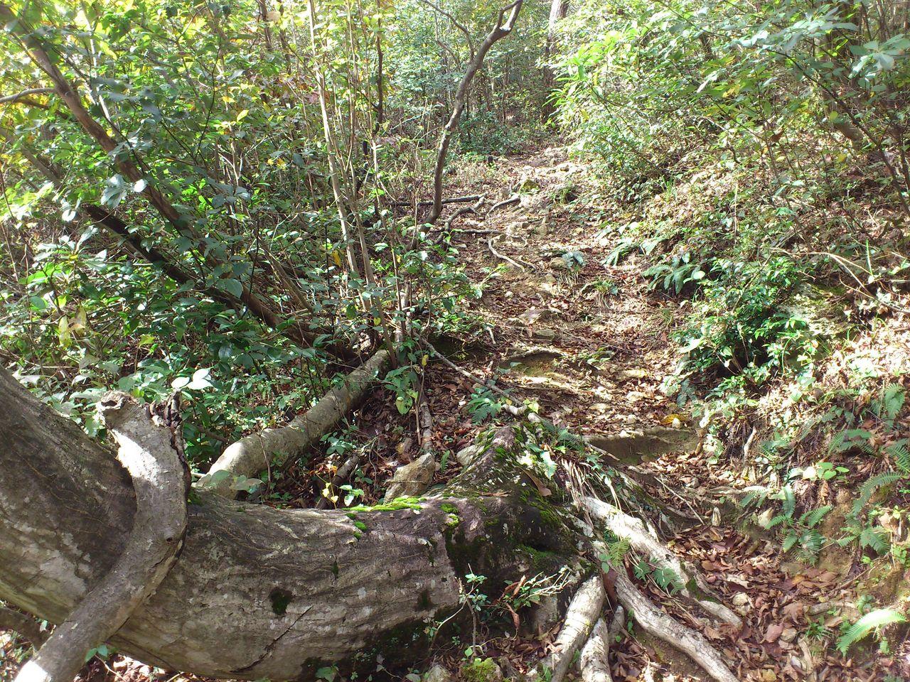 木の根っこを乗り越えて