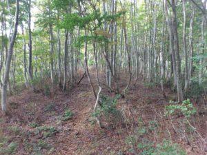 ブナの林を抜けて