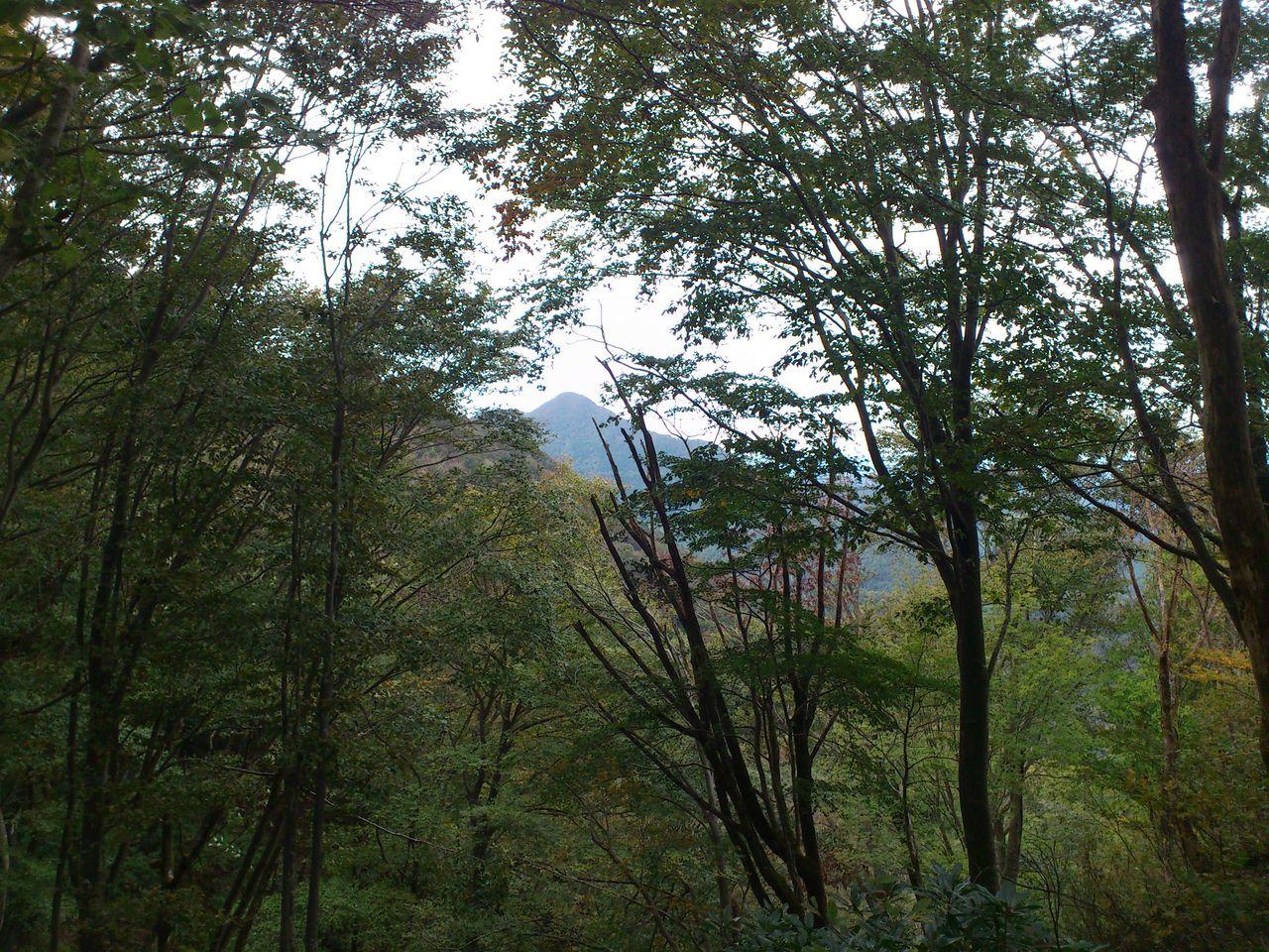 木立の奥に高頭山