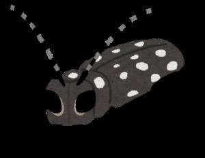 カミキリムシ