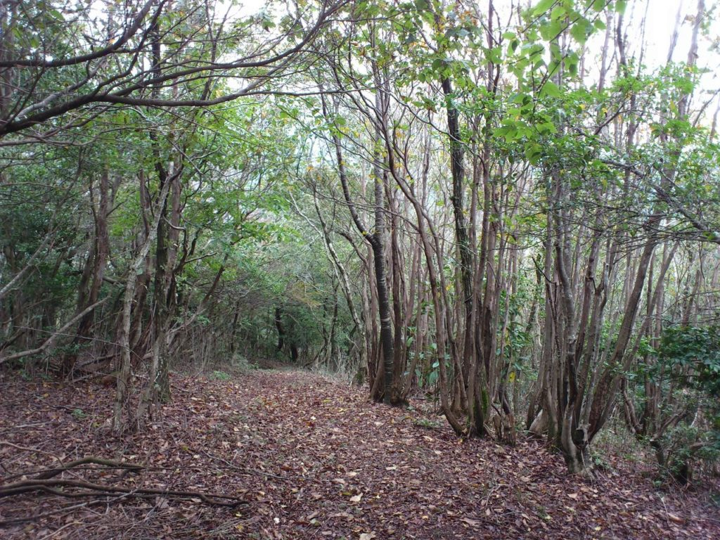 萌芽更新の森
