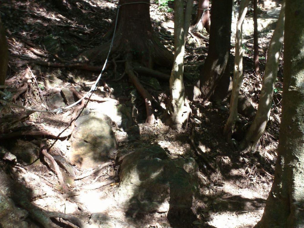 木の根と岩場の融合