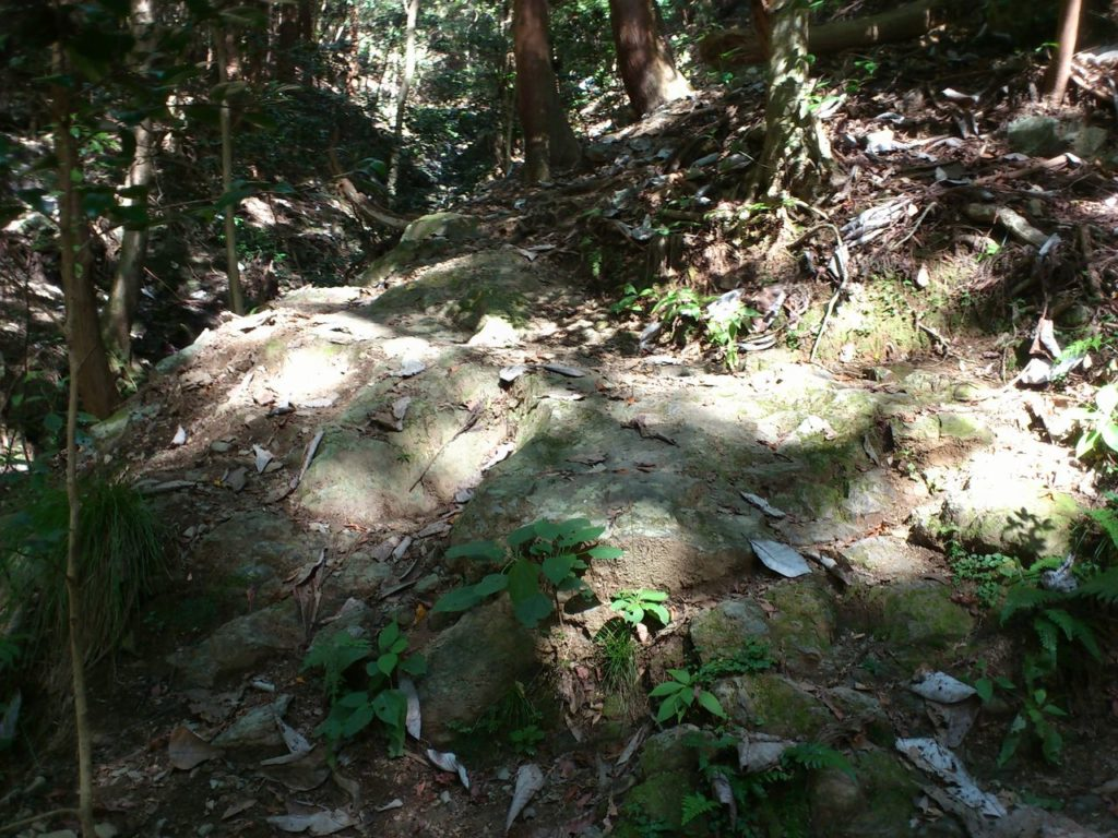 ホオ葉だらけの岩場