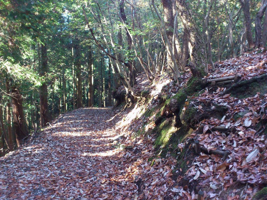 尾根筋から下りて滝谷林道へ