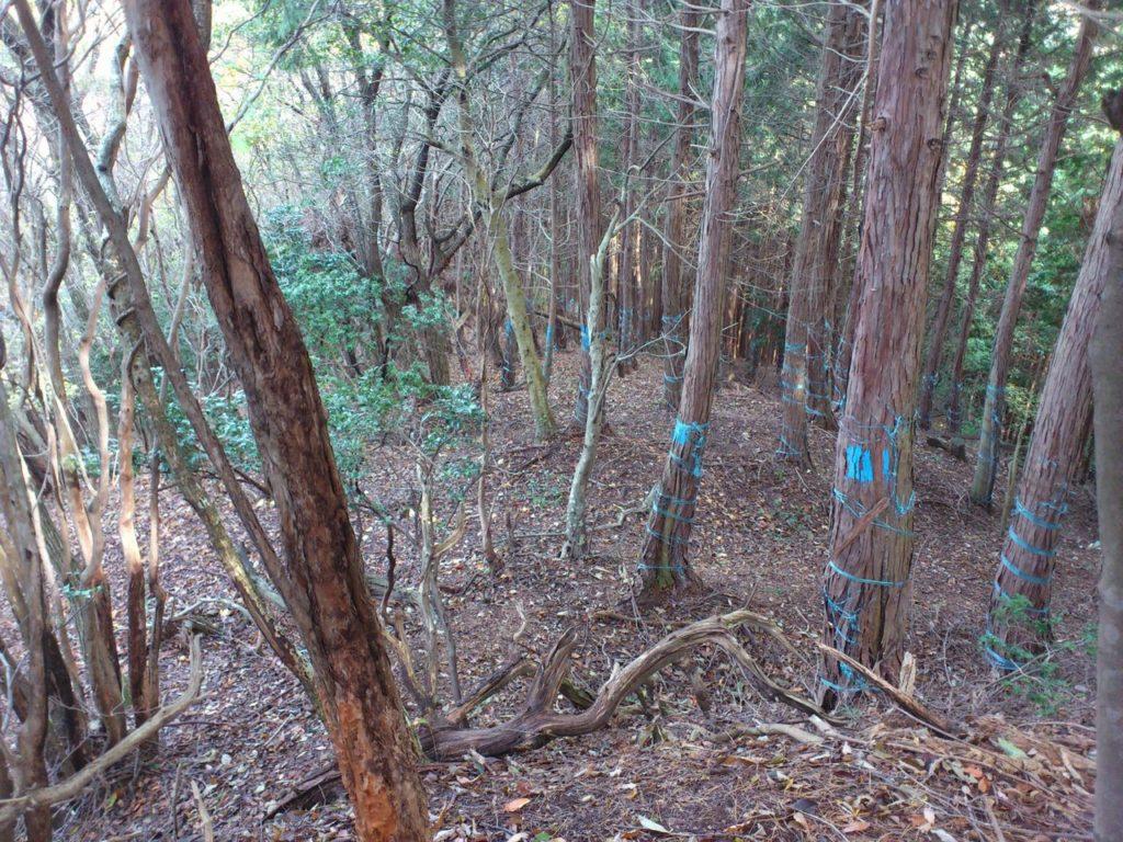 須川山砦跡北側の尾根
