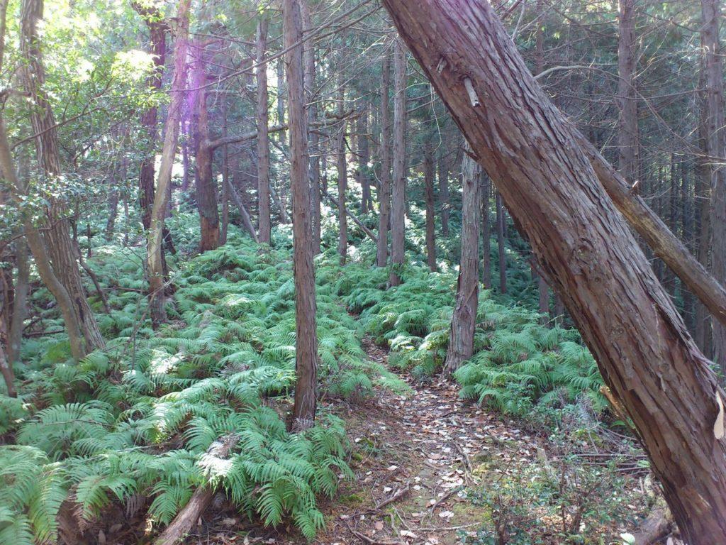 鬱蒼とした植林地帯