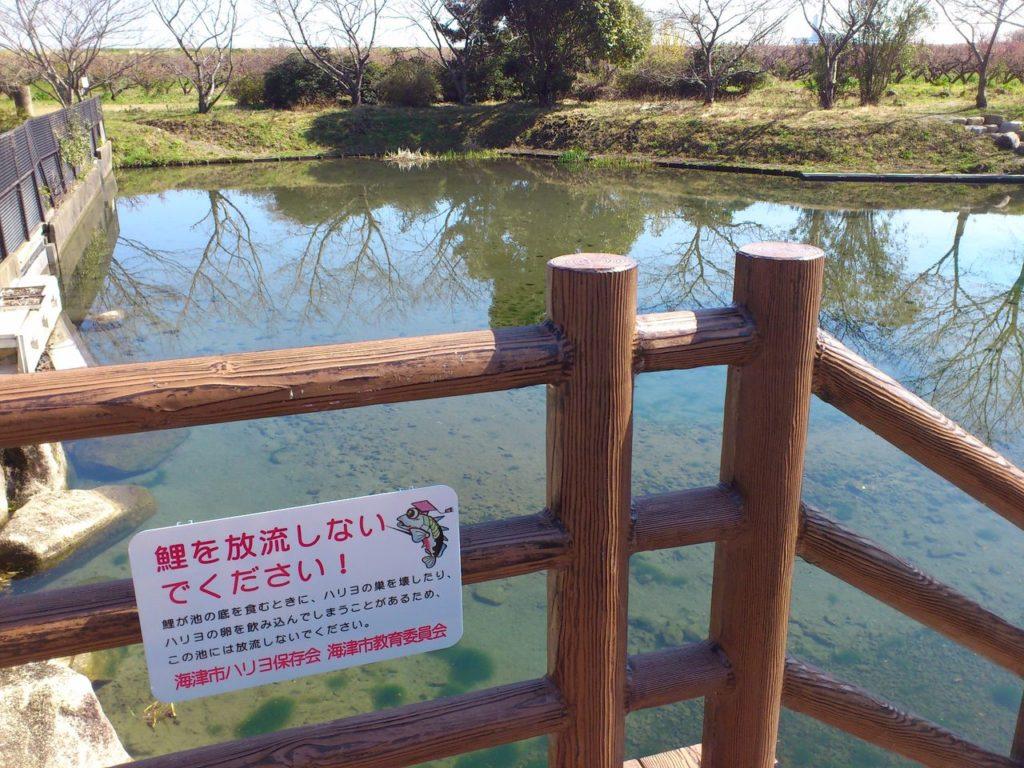 北部浄水公園ハリヨ生息池