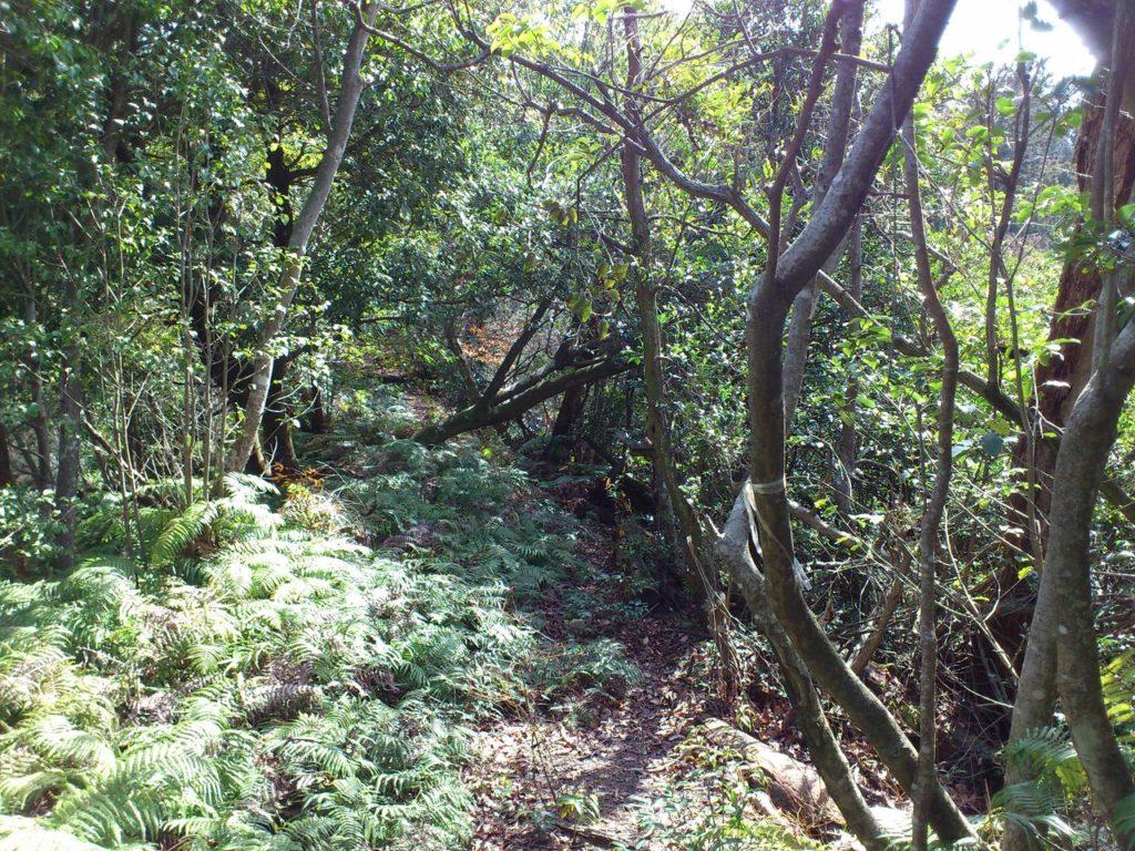 山道は鬱蒼とした森の中へ