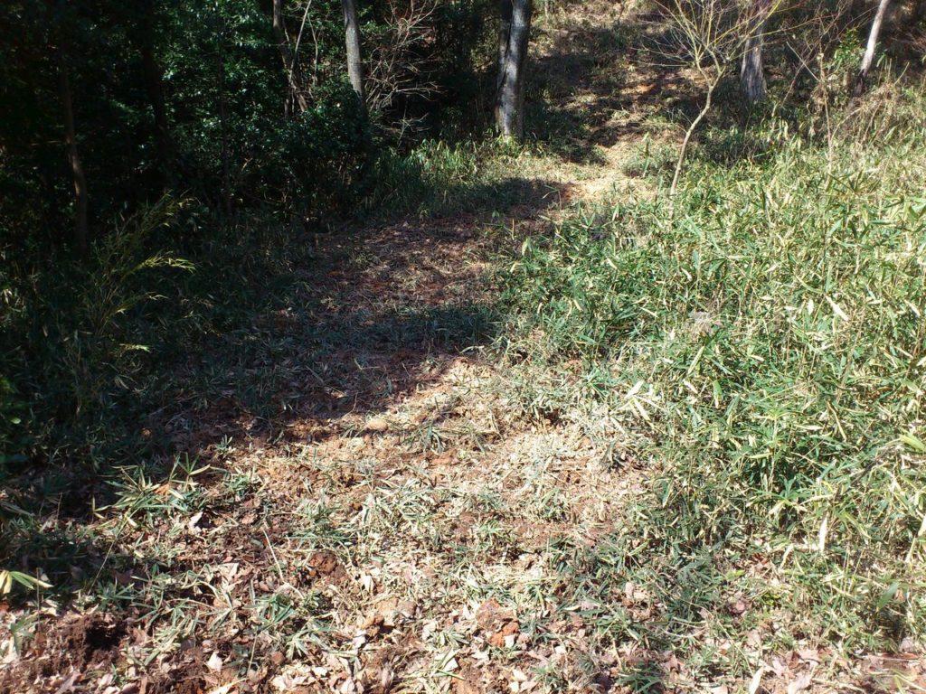 イノシシが掘り返した跡