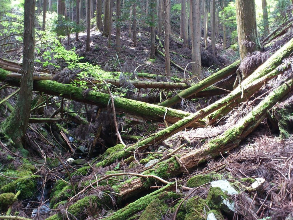 大量の倒木で通行止め