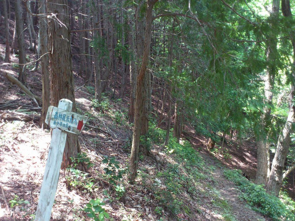 森林学習展示館への道