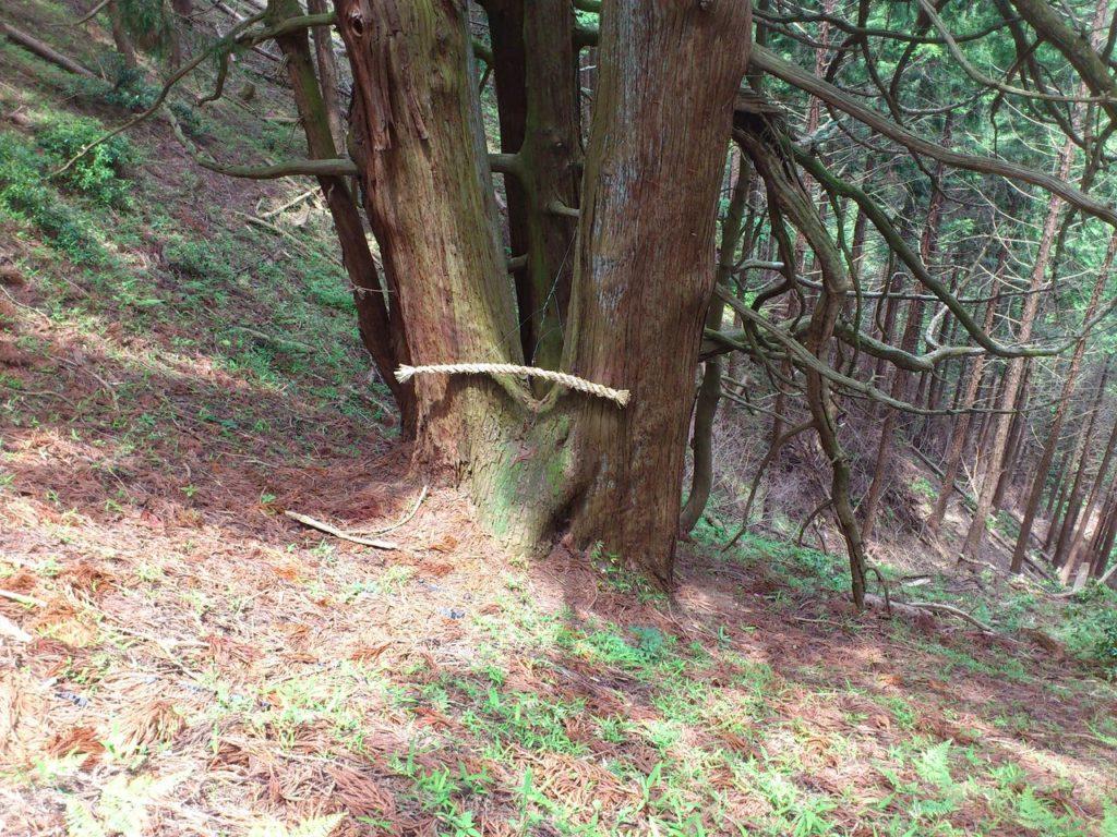 さかさ杉の根元へ