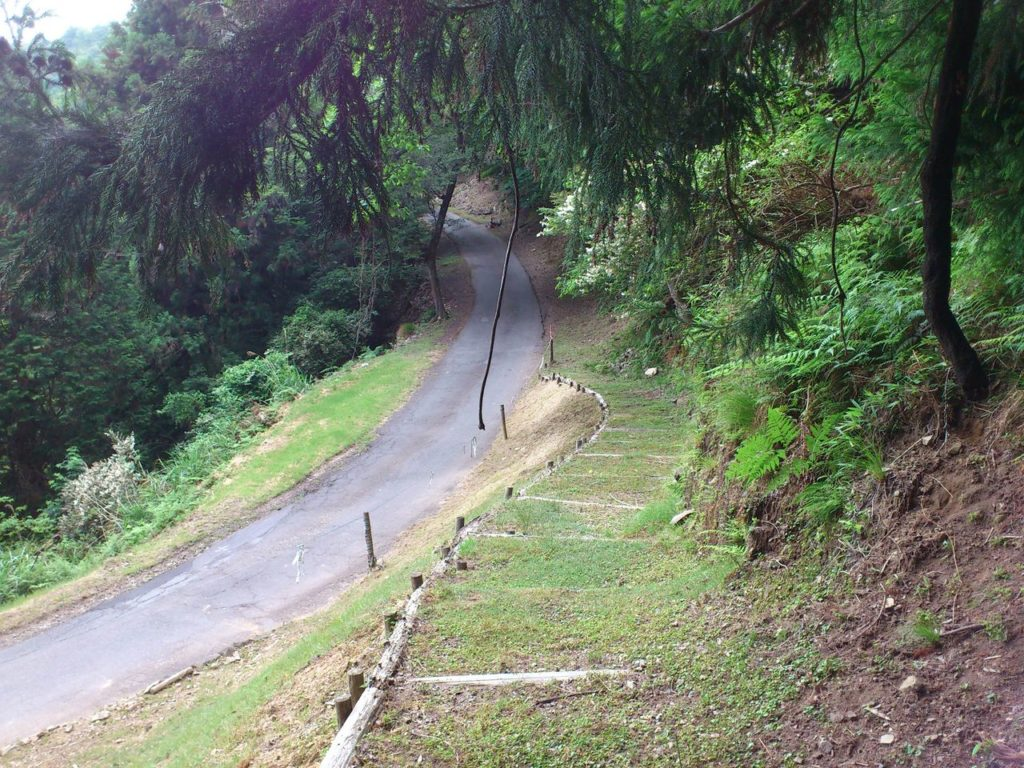 サザンカの小道から舗装林道へ