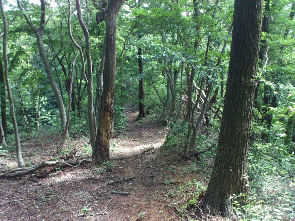 林谷山砦跡への下り坂