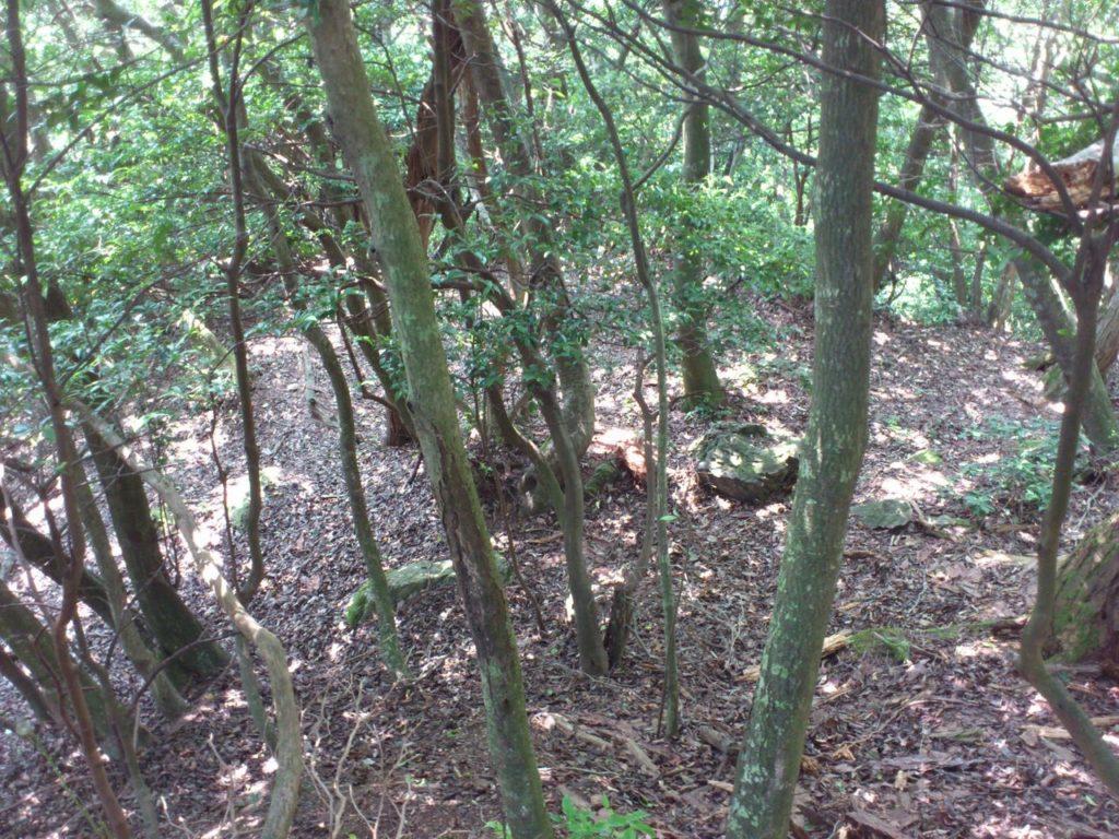木立の下に曲輪