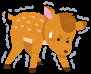 生まれたての子鹿
