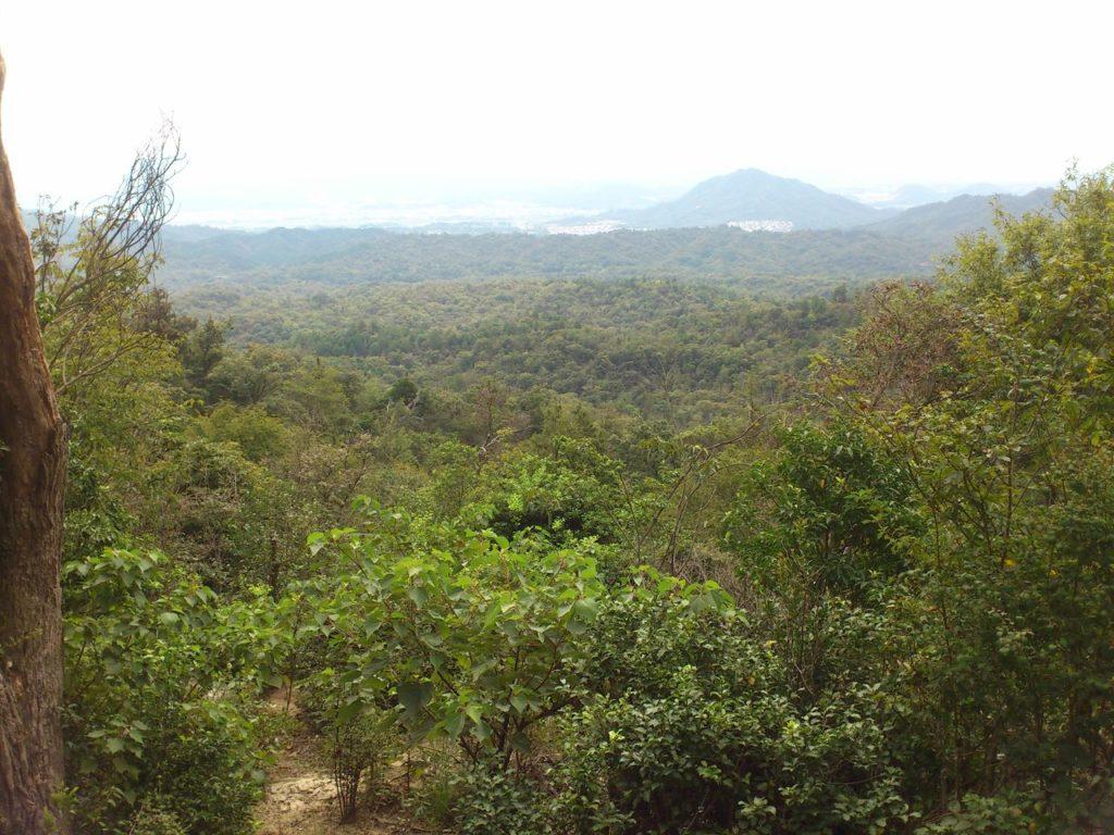 鏡山ふもとの樹海