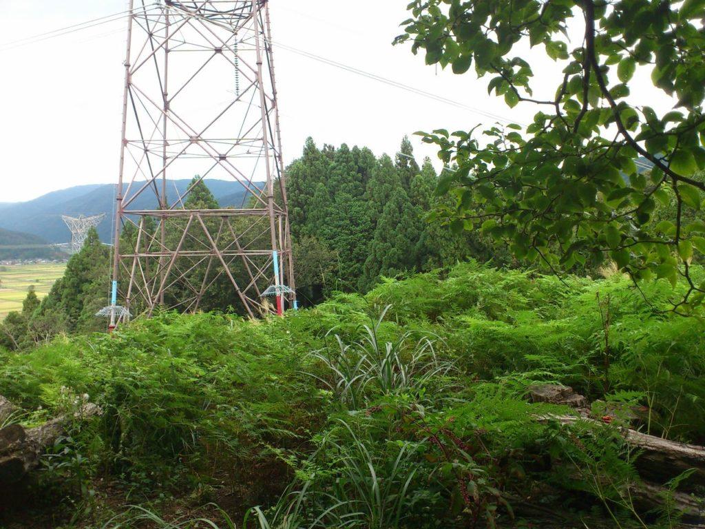 草ぼうぼうの送電鉄塔の敷地