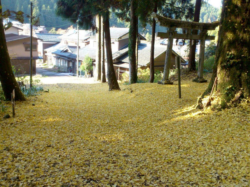 八幡神社のイチョウの絨毯