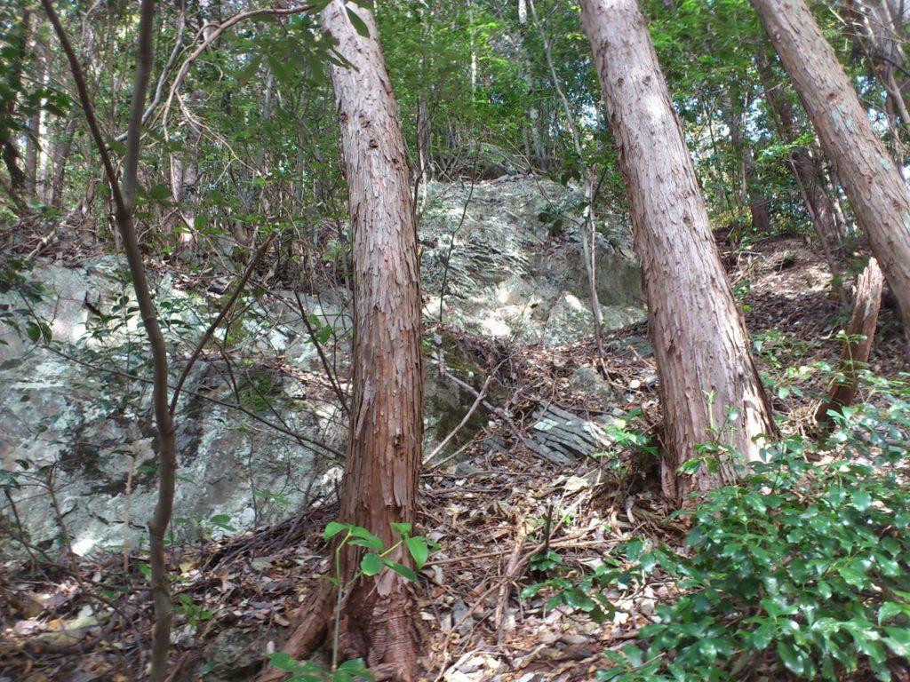 見上げると巨岩