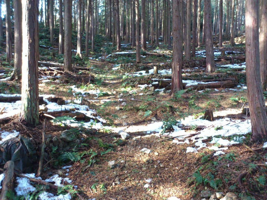 段々畑跡の植林地帯