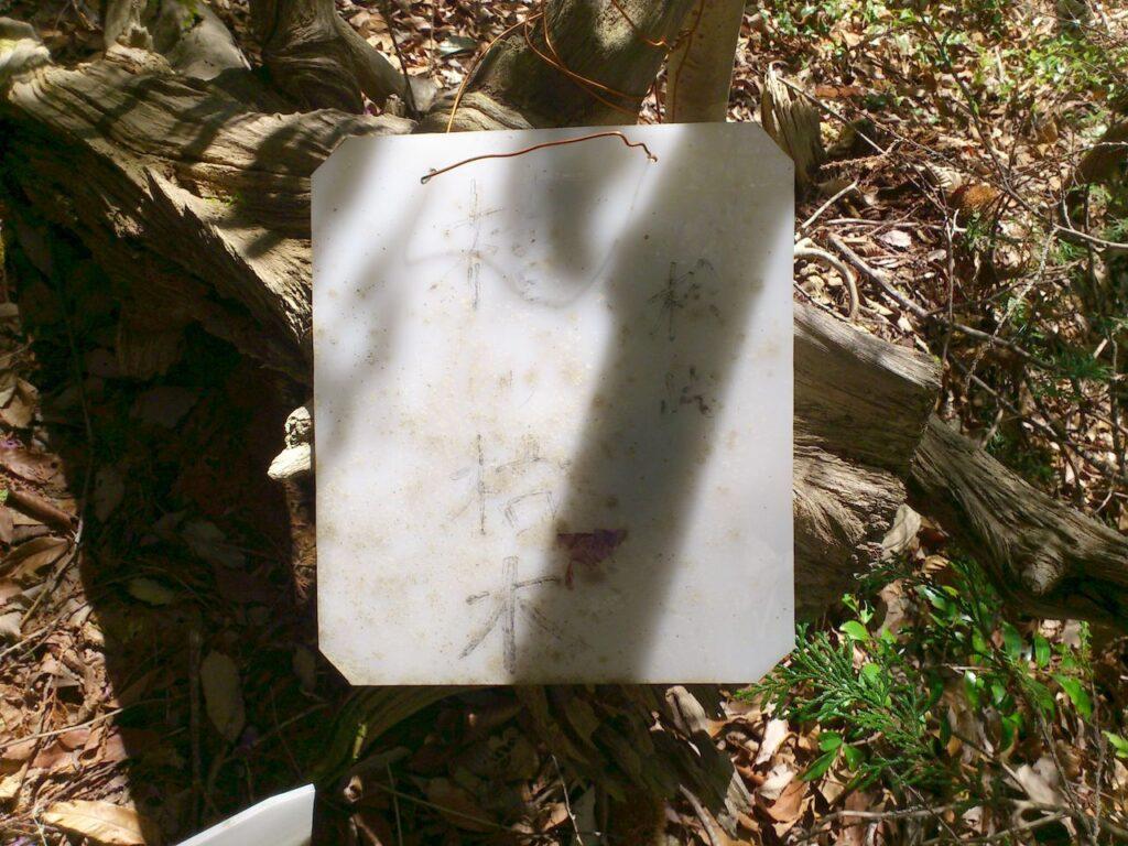 桧峠 檜の枯木